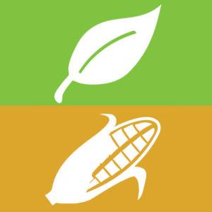 Contenitori per asporto cibo biodegradabili